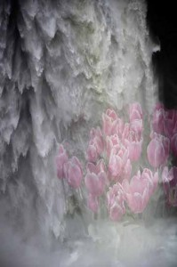 waterfall tulips fine art print