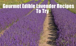 Gourmet Edible Lavender Recipes To Try