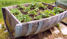 Start Your Own Container Garden