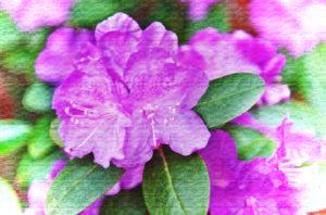 Purple Azalea Flower Digital Art - Poisonous Plants And Children